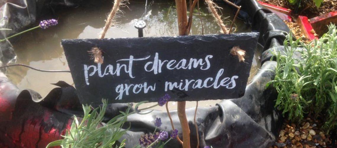 plant_dreams